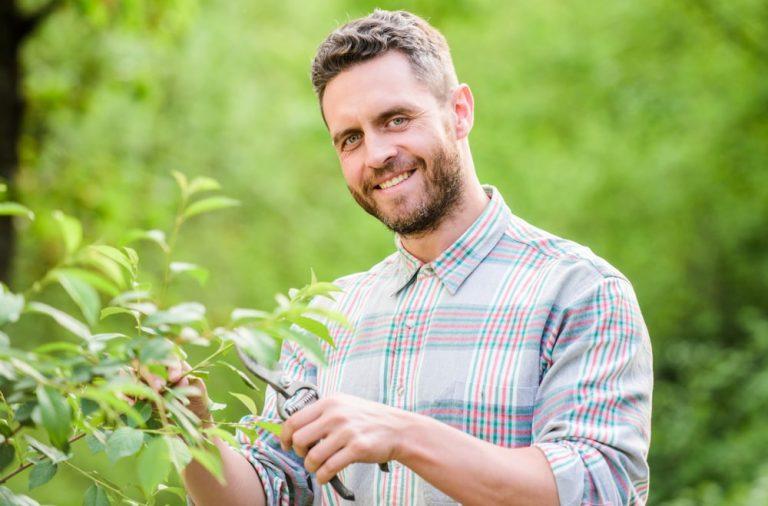 Growbox DIY – jak zrobic samodzielnie namiot uprawowy